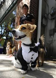 this is why our pets halloween chicago tribune