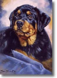rottweiler prints limited edition prints and