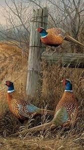 Ducks Unlimited Weathervane 28 Best Pheasant Images On Pinterest Pheasant Pheasant Hunting