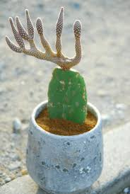 Cactus Planter by 652 Best Cacti And Succulents Images On Pinterest Cacti And