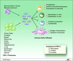 transforming growth factor β and the immune response implications