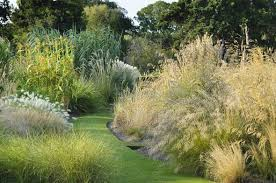 alan titchmarsh tips on growing ornamental grasses garden