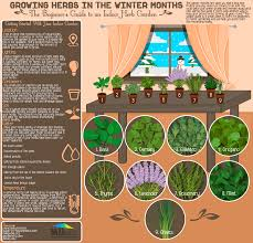 growing herbs in the winter months infographic visualistan