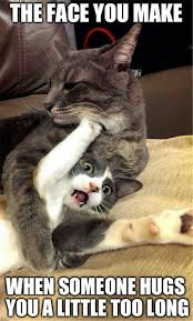 Cat Hug Meme - 31 cats you won t believe actually exist funny animal funny