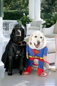 Lab Halloween Costume Ideas 216 Best Funny Dogs Images On Pinterest Animals Funny Dogs And