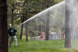 forest expert urges pine tree owners to spray now to combat