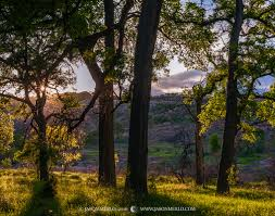 hill country images