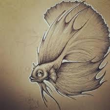 drawn fish beta fish pencil and in color drawn fish beta fish