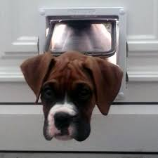 boxer dog 2015 diary boxer puppies mischief makers or model citizens among dogs