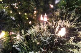 free stock photo of up of white lights in tree