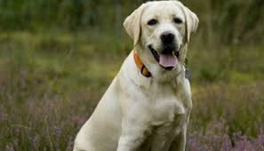 low sodium dog food feed your dog with the best diet low sodium