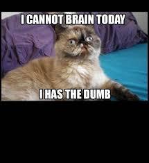 Stupid Cat Meme - 12 best dumbass cats images on pinterest funny stuff so funny