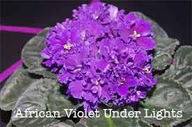 african violet grow light how to build an indoor grow lights system