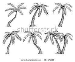 vector illustration palm tree sketch design stock vector 664571311