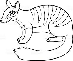 coloring pages little cute numbat smiles stock vector art