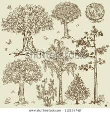 vintage oak tree stock images royalty free images vectors