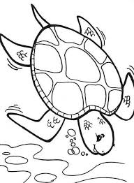 turtle coloring pages kids coloringstar