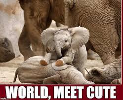 Elephant Meme - baby elephant imgflip