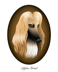afghan hound underwater illustrator sharon tancredi sets out to draw 100 dog breeds
