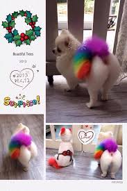 bichon frise good and bad pet grooming the good the bad u0026 the furry model dog grooming