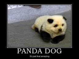 Funny Panda Memes - panda dog