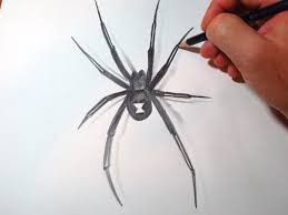 drawn spider easy pencil and in color drawn spider easy
