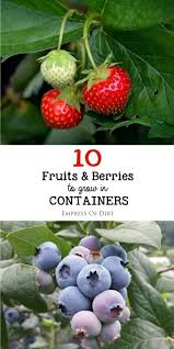 Patio Fruit Trees Uk by The 25 Best Fruit Trees Ideas On Pinterest Growing Fruit Trees
