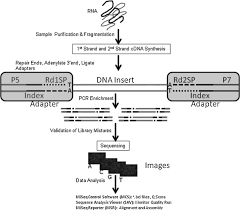 simultaneous and complete genome sequencing of influenza a and b