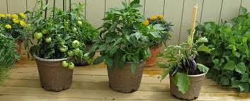 vegetable gardening in containers shelly u0027s garden country