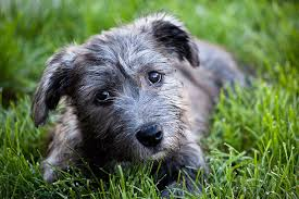 Obscure Dog Breeds You Should Know Because They re Adorable