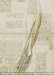 Leonardo Da Vinci Human Anatomy Drawings The Startling Accuracy Of Leonardo Da Vinci U0027s Anatomical Sketches