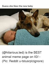Best Animal Memes - guess she likes the new baby is the best animal meme page on ig