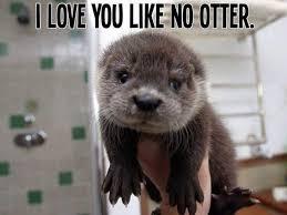 Otter Memes - sea otter meme the best sea of 2018