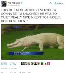 Alligator Memes - 2016 disney resort alligator attack know your meme