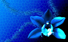 Blue Orchids Blue Orchids 3d And Cg U0026 Abstract Background Wallpapers On