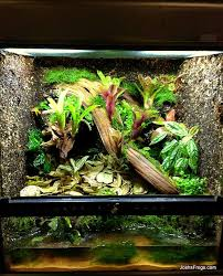 terrarium construction helping you connect with nature josh u0027s