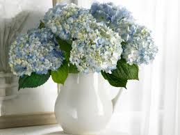 hydrangea wallpapers and images wallpapers pictures photos