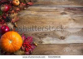 thanksgiving fall background orange pumpkins fall stock photo
