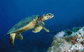 marine life environment by jocelyn jasso on prezi