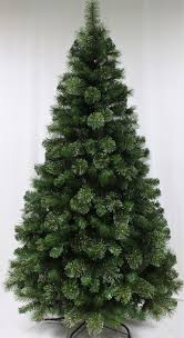majestic dew pine tree 4ft to 10ft