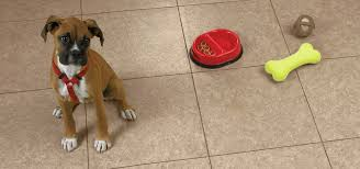 Best Flooring With Dogs How To Choose The Best Flooring For Pets Home Remodeling