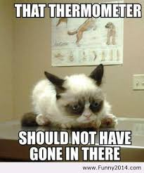 Happy New Year Meme 2014 - grumpy cat is more grumpy these days image 1119621 by funny2014