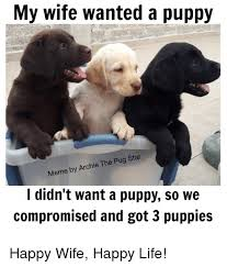 Puppy Memes - my wife wanted a puppy meme by archie the pug star i didn t want a