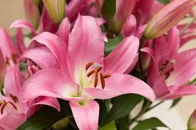 lily flower names u2013 thin blog
