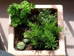 indoor herb garden indoor plants expert
