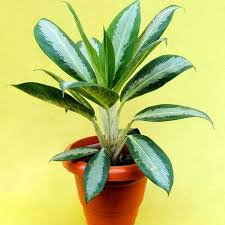 decorative plants service provider from kolkata