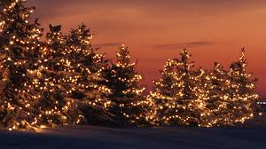 lighted trees in the sunset