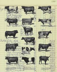 real vintage ledger paper print cow study from 19th century decor