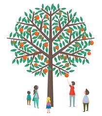 about orange tree project orange tree project