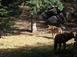 Iowa Wild Animals images Wild animals j muller photos jpg